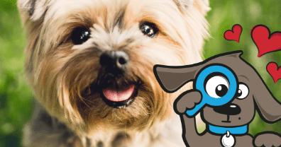 Hondenverzekering Vergelijken → Direct de Beste & Goedkoopste Vinden